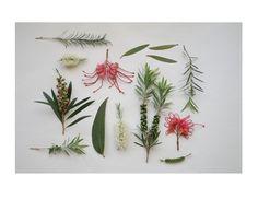 Botanicals, Arranged