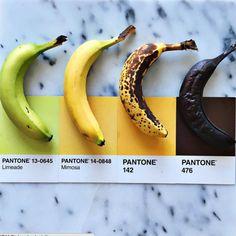 Lucia Litman  Quand les aliments du quotidien rencontrent les couleurs Pantone