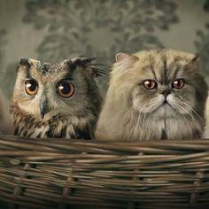 フクロウ猫07 Owl and pussycat went to sea in a beautiful pea green boat.......