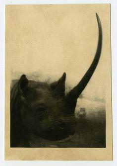 A Most Terrifying Monster.....silver gelatin print....www.jeffersonhayman.com