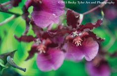 Oncidium Orchid Fine Art Photo Print by BeckyTylerArt on Etsy