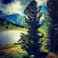 Some trees #nature #nendazisbeautiful #nendaz #valais #switzerland #visitvalais #igersuisse #igernendaz #alpes #valaiswallis #tracouet #suisse #switzerland