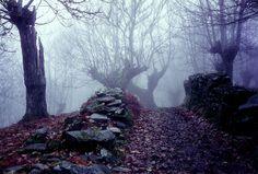 bosque con niebla tenebroso...me encantaaa