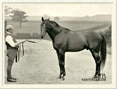 Donovan(1886)Galopin- Mowerina By Scottish Chief. 4x4 To Voltaire, 4x5 To Birdcatcher, Bay Middleton & Touchstone. 21 Starts 18 Wins 2 Seconds. $275.000 Est. At The Time A World Record For Earnings. Won Epsom Derby(Eng), St. Leger(Eng), Middle Park S(Eng).