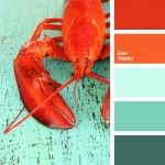 color for a decor, color of a boiled lobster, color of boiled crayfish, color palettes for a decor, contrast colors, coral, Orange Color Palettes, palettes for designer