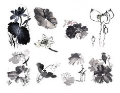 10 painting ink lotus definition picture
