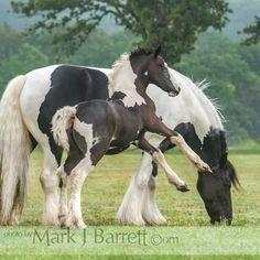Маленькие Жеребята, Тяжеловозы, Любовь Лошадей, Дикие Лошади, Фото С Лошадьми, None, Красивые Лошади, Лошади, Животные