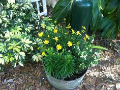 Flowers in bloom  at Dade City's Wild Things