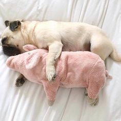 Long weekend withdrawals xx #dollygirlfashion #tumblr #sourceunknown #pug