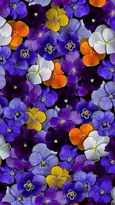 """Newest Snap Shots Pansies wallpaper Strategies Pansies are the colorful flowers with """"faces."""" A cool-weather favorite, pansies are ideal for bo Plant Wallpaper, Purple Wallpaper, Flower Wallpaper, Wallpaper Wallpapers, Iphone Wallpapers, Rare Flowers, Pretty Flowers, Purple Flowers, Colorful Flowers"""