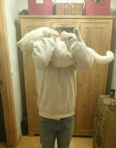 Me.. Trying to hold a Simon.  He is a very big cat.