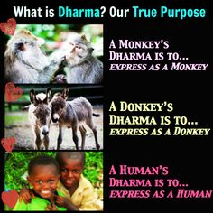 What is Dharma? Our True Purpose. For more Traditional Tantra Philosophy, click here --> www.facebook.com/brightsideyoga Tantra, Philosophy, Purpose, Yoga, Traditional, Facebook, Movie Posters, Film Poster, Philosophy Books