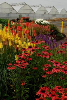 My Favorite Plant Combinations 50 (My Favorite Plant Combinations design ideas and photos Garden Shrubs, Garden Plants, Flowers Perennials, Planting Flowers, Flowers Garden, Beautiful Gardens, Beautiful Flowers, Deco Floral, Garden Pictures