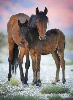 Mare and Foal by David Becker