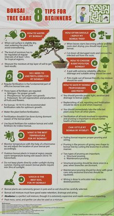 As a spoonie, I'm finding it difficult to let go of my old life & hobbies. Perhaps bonsai will be a satisfying new hobby. Low energy yet creative. Bonsai Tree Care Tips for Beginners Infographic Bonsai Tree Types, Bonsai Tree Care, Indoor Bonsai Tree, Bonsai Trees, Bonsai Ficus, Wisteria Bonsai, Juniper Bonsai, Bonsai For Beginners, Gardening For Beginners