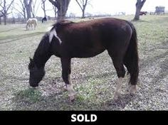 Resultado de imagen para minimal tobiano horses