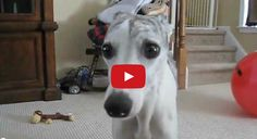 HILARIUS!! The Owners Thought They Knew Their Dog Until They Saw This Video That The Dog Sitter Made..LOL