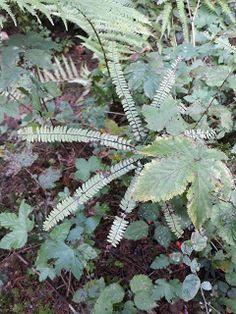 Sonnendufts Blog: Farn Exkursion Plants, Blog, Botany, Adventure, Planters, Plant, Planting