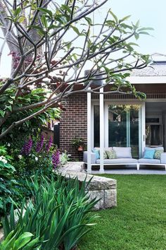 Reaching through the frangipani branches are the long strappy leaves of ginger lily (hedychium gardnerianum), a subtropical plant that was often used in the gardens of Federation homes. A tidy lawn compliments the lush garden in this home in Sydney's inner west. Photography: Brigid Arnott