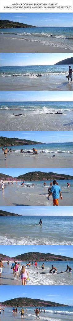 Faith In Humanity Restored - 12 Images - Death To Boredom Hope Quotes, Faith Quotes, Human Kindness, 12 Image, Faith In Humanity Restored, Thing 1, Faith In Love, Dolphins, Animal Rescue