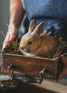 A picture is worth a thousand words. There are always two people in every picture: the photographer and the viewer. Hunny Bunny, Baby Bunnies, Cute Bunny, Bunny Rabbits, Baby Animals, Cute Animals, Finding Neverland, Country Blue, Country Living