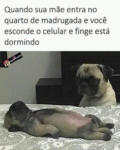 Explore our web site for even more info on pugs. It is a superb area to find out more. Memes Humor, Funny Memes, Jokes, Pug Meme, Funny Dogs, Funny Animals, Carlin, Pug Puppies, Funny Jokes