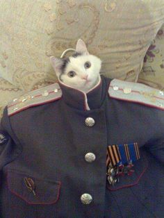 """""""Lead me, follow me, or get out of my way!"""" - General Meowge Katton #funny #cat"""