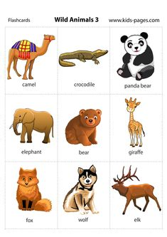 printable flashcard with wild animals for parents and teachers English Kids English, English Tips, English Study, English Lessons, English Words, English Grammar, Teaching English, Learn English, Animal Activities