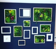 Collage de cuadros vegetales de plantas preservadas para decoración de pared interior