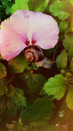 Snail, Animals, Animais, Animales, Animaux, Snails, Animal, Slug, Dieren