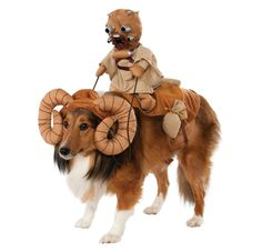 Tusken Raider riding a Bantha dog costume