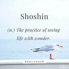 "Word for Today: Shoshin (n) The practice of seeing life with wonder. A word from Zen Buddhism which means ""beginner's mind"". It refers to having an attitude of openness, eagerness, and lack of preconceptions when studying a subject, Unusual Words, Weird Words, Rare Words, Unique Words, New Words, Powerful Words, Cool Words, Strange Words, Now Quotes"