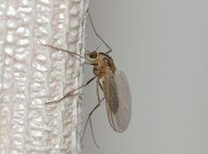 El truco definitivo para acabar para siempre con los mosquitos en tu casa