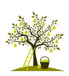 pear tree, ladder and basket of pears Stock Photo - 9632507