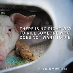 there is no right way (humane way) to kill someone who does not want to die #vegan #vegetarian