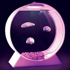 Sweet Jelly tank!