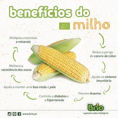 Beneficios do milho biológico