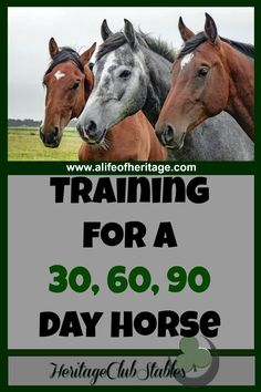 """""""What should a horse know by the end of 30 days?"""" Print out this helpful, FREE printable: The 90 day horse to give you a training starting point. Horse Barns, My Horse, Horse Riding, Horse Stalls, Trail Riding, Western Riding, Horse Gear, Horse Exercises, Training Exercises"""