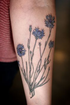 Bachelor's button/cornflower tattoo by Alice Carrier at Wonderland Tattoo in Portland, OR.  http://alicecarrier.tumblr.com http://wonderlandtattoospdx.tumblr.com http://wonderlandpdx.com