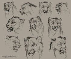 Dey - Head Sketches by DeyVarah on deviantART
