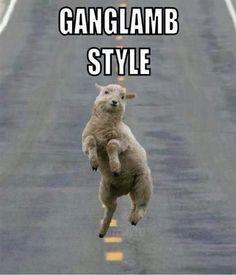 Gangnam ganglamb