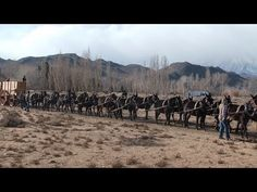 This is the very first hitching of the 20 mule team to the new Borax wagons in Bishop, CA. Bobby Tanner, mules, and crew did a great job again. Coach Shop, Horse Drawn Wagon, Wooden Wagon, Old Wagons, Book Drawing, Draft Horses, Old West, Working Class, Cowboys