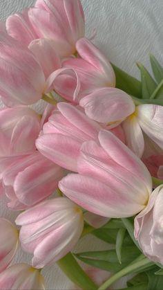 Flowers Nature, Pink Flowers, Beautiful Flowers, Flower Background Wallpaper, Flower Backgrounds, Flower Farm, My Flower, Aesthetic Iphone Wallpaper, Aesthetic Wallpapers