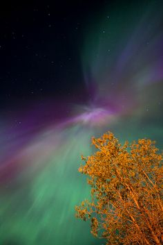 Northern Lights - Canada.I want to go here one day.Please check out my website thanks. www.photopix.co.nz