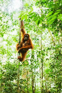 Brittany Wood- Sumatra, Indonesia. 2016?