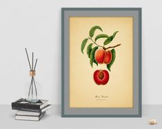 Peach Vintage digital art poster botanical picture antique home wall cubicle decor old image wall cubicle decor drawing watercolor art Old Images, Botanical Wall Art, Watercolor Art, Digital Art, Peach, Cubicle, Antiques, Drawings, Unique Jewelry