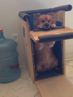 doggy chair