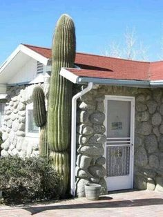 Isso e amor pela natureza.... They built the house around this cactus!
