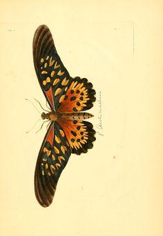 v.1-3 (1837) [plates] - Illustrations of exotic entomology : - Biodiversity…