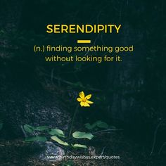 """""""SERENDIPITY"""" Finding something good without looking for it. I wasn't looking for you when I found you.  That's  what makes it all the more magical."""